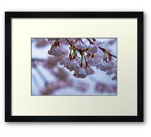 Top of the Morning to Ya Framed Print