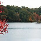 Changing Leaves in Rhode Island by prpltrtl8
