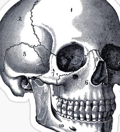 Skull Sticker