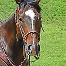 Equine Beauty by Al Bourassa