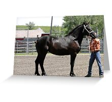 Gorgeous Percheron Mare Greeting Card