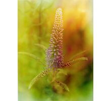flowerpower Photographic Print