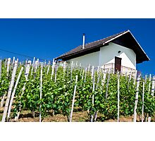 Vineyard slope in Slovenia Photographic Print