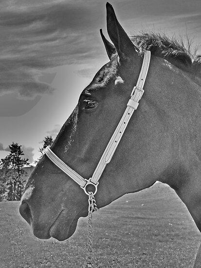 Profile Of A Percheron by Al Bourassa