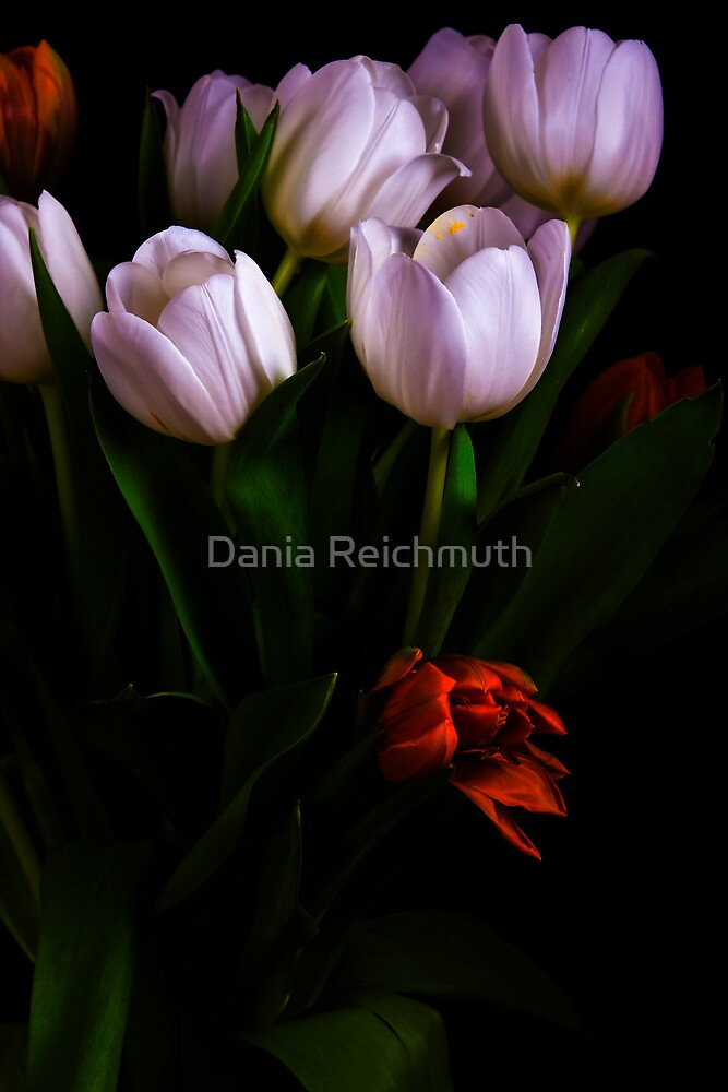 Tulips Series by Dania Reichmuth