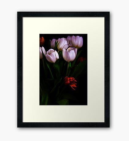 Tulips Series Framed Print