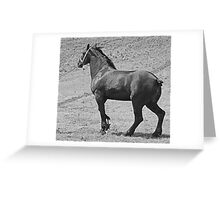 Power On The Hoof Greeting Card