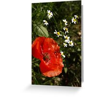 Path side Poppy Greeting Card