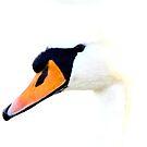 Handsome Swan2 by skaranec1981
