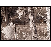 Fences and Trees  Photographic Print