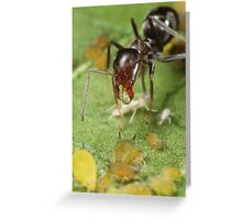 Symbiotic Relationships Greeting Card