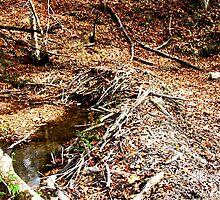 Beaver Dam - Shawnee State Park by Megan Howard