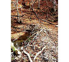 Beaver Dam - Shawnee State Park Photographic Print