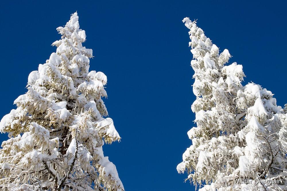 Fresh Snow by Walter Quirtmair