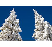Fresh Snow Photographic Print