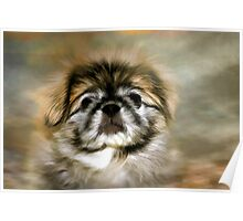 Max the Pekingese Poster