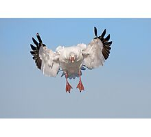 Incoming Snow Goose Photographic Print