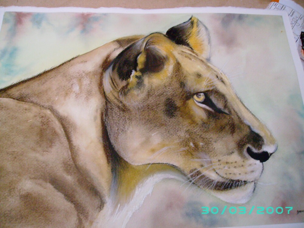 Lioness by dinky