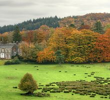 The Colours of Autumn-Finsthwaite House by Jamie  Green