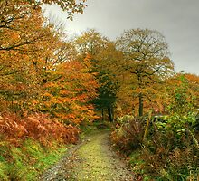The Colours of Autumn-Finsthwaite Bridleway by Jamie  Green