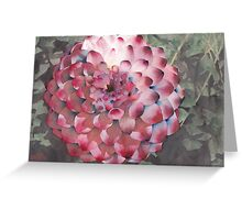Point Defiance Dahlia Greeting Card