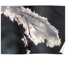 Frosty Macro Poster