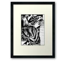 Black & White Tabby Framed Print