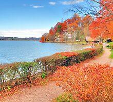 Fall 2010 at Kochelsee. Germany. by Daidalos