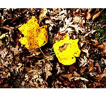 Fallen Leaves - Shawnee State Park Photographic Print