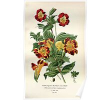 Favourite flowers of garden and greenhouse Edward Step 1896 1897 Volume 3 0183 Harlequin Monkey Flower Poster
