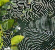 web of lp by coastwind