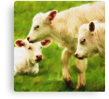 """White Calves"" Canvas Print"