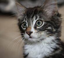 Kitten Love by AlysiaWalker