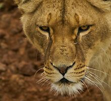 Whiskers by Tony Walton