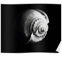 Shell Shape in Black Poster