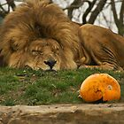 I've had enough pumpkin for today by Tony Walton