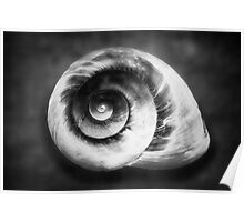 Gastropod Helix Poster