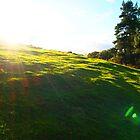 Welsh fields by nickilalala