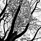 Black & White Tree, with leaves falling. by lendale