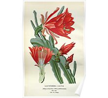 Favourite flowers of garden and greenhouse Edward Step 1896 1897 Volume 3 0002 Leaf Stemmed Cactus Poster