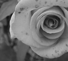 Rose by nickilalala