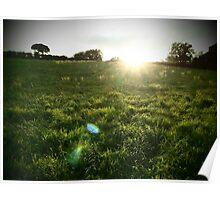Irish fields Poster