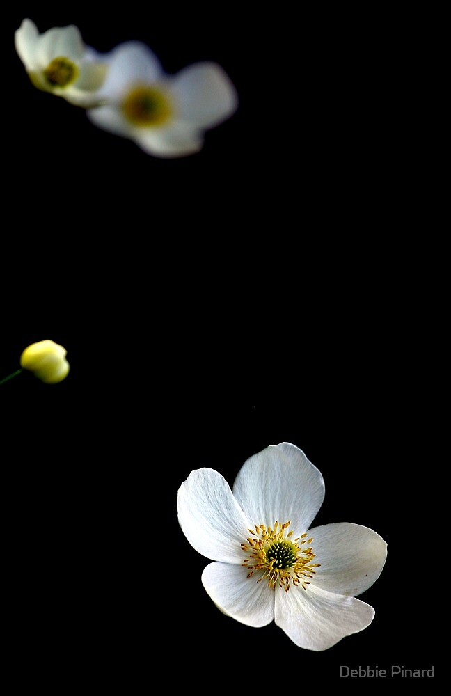 Floating Flowers 5 by Debbie Pinard