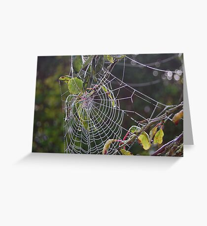 Dew on spiders web Greeting Card