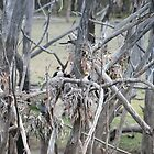 Bird Nursery in the Bush by aussiebushstick