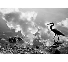 Birdy in Muddy Waters Photographic Print