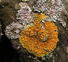 Lichen on the Rocks by Kat Simmons