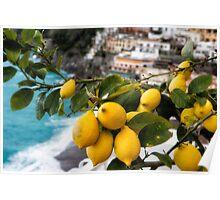 Amalfi Coast Lemon Tree  Poster