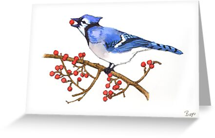 Blue jay 1 - Christmas card by llawrence
