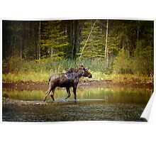 Casual Moose Poster